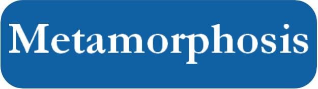 bouton metamorphosis